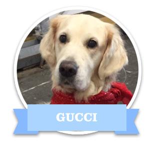 7_gucci