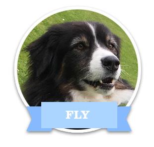 3_fly