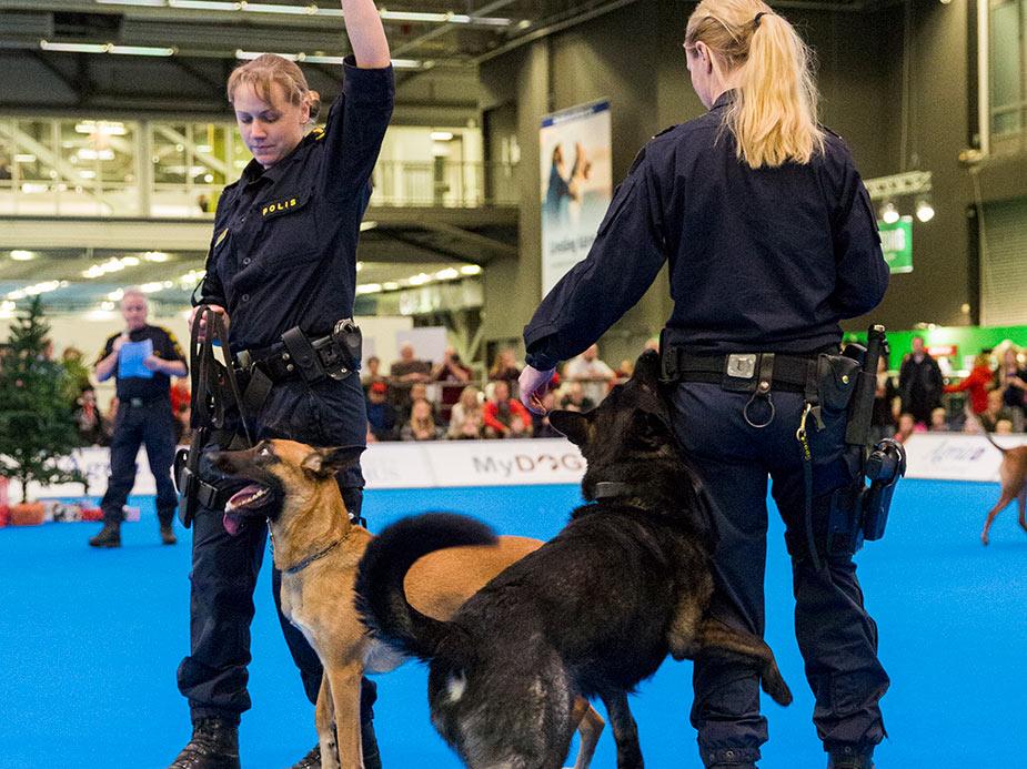 polisen på mydog