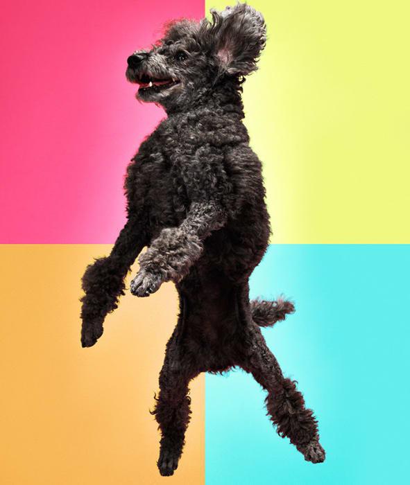 freestyle mydog