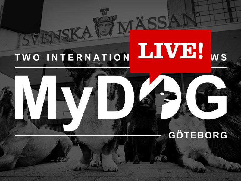MyDOG Live!